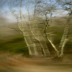 Ireland: Connemara Spinning Tree