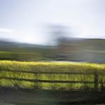 Ireland: Glendalough Hedge and Fence
